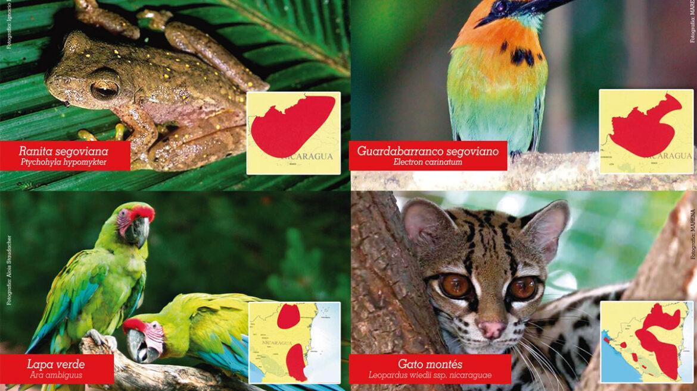 Especies en peligro de Extinción 3