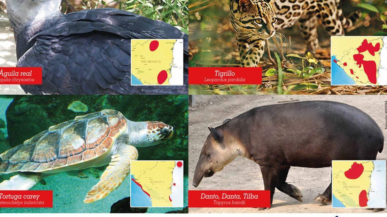 Especies en Peligro de Extinción 1